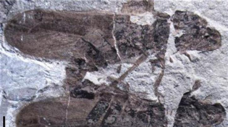 sexoyaliki-syneyreysi-diarkeias-165-ekatommyrion-eton
