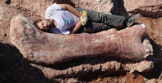 'Biggest dinosaur ever' discovered 02